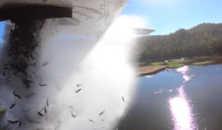 """Negli Stati Uniti, i laghi dello Utah sono """"bombardati"""" con migliaia di pesci per mantenere la loro popolazione"""