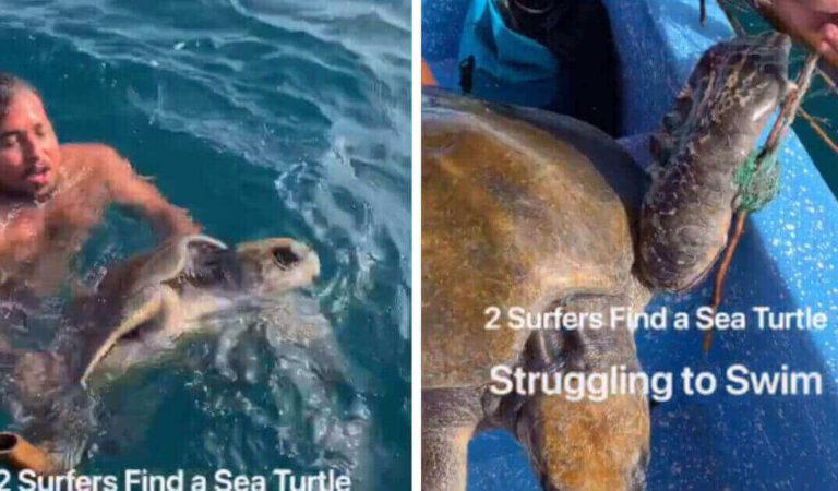 I surfisti ricevono le congratulazioni da migliaia di utenti dopo aver aiutato una tartaruga in mezzo al mare