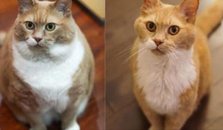 13 gatti prima e dopo la dieta. Non sono andati a Vite al limite ma il risultato è uguale!