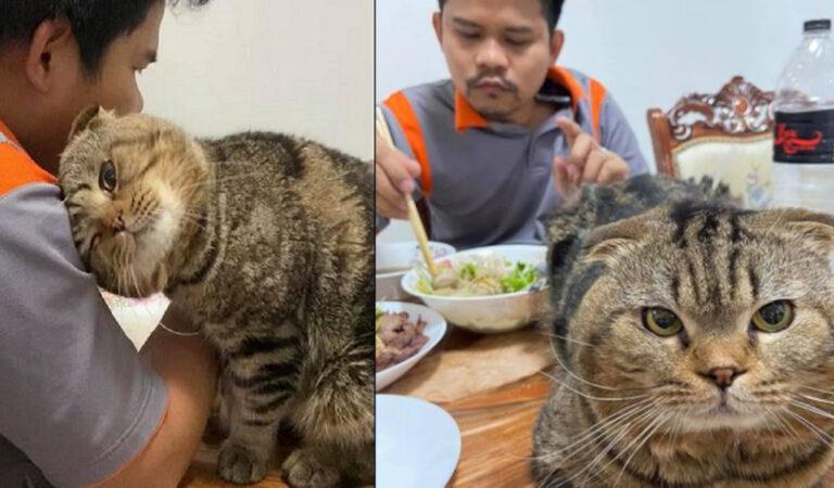 La moglie documenta in modo esilarante come il gatto si è  appropriato del marito. (11 Foto)