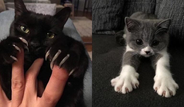 18 gatti che hanno mostrato i loro artigli al mondo