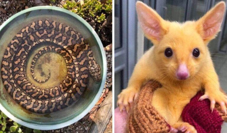 18 foto che mostrano che l' Australia è un  paese con un ambiente naturale davvero unico