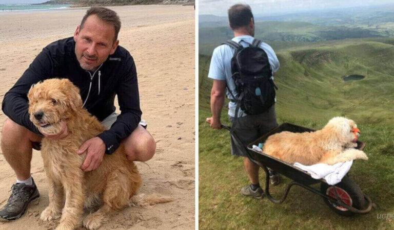 Il padroncino porta il suo vecchio cane a fare l'ultima passeggiata in carriola