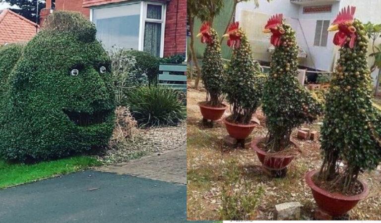 Giardini strani: 17 giardinieri che hanno dato forma alla loro creatività