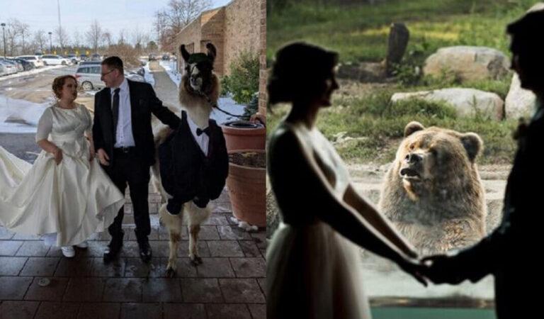 """Matrimoni da ricordare: 15 sposi che hanno reso le loro nozze """"uniche"""""""