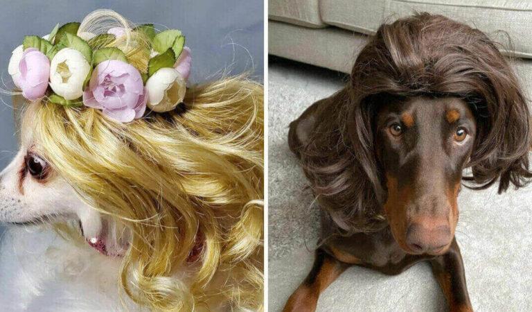 16 persone che hanno condiviso foto dei loro cani che indossano parrucche e sono esilaranti