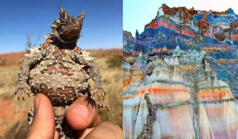 21 foto che mostrano che madre natura ha dipinto il mondo con migliaia di splendidi colori