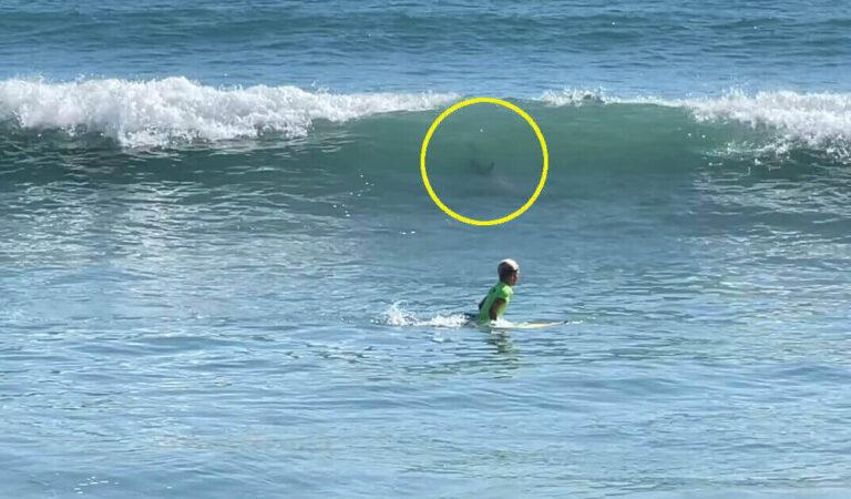La telecamera riprende come un bambino di 11 anni è sfuggito all'attacco di uno squalo in Florida