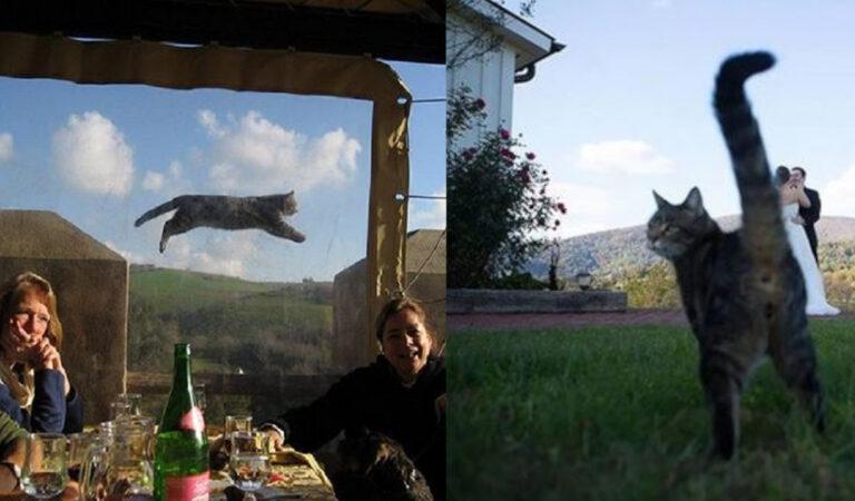 20 gatti con l'abilità di rovinare in ogni modo le foto dei loro amici umani