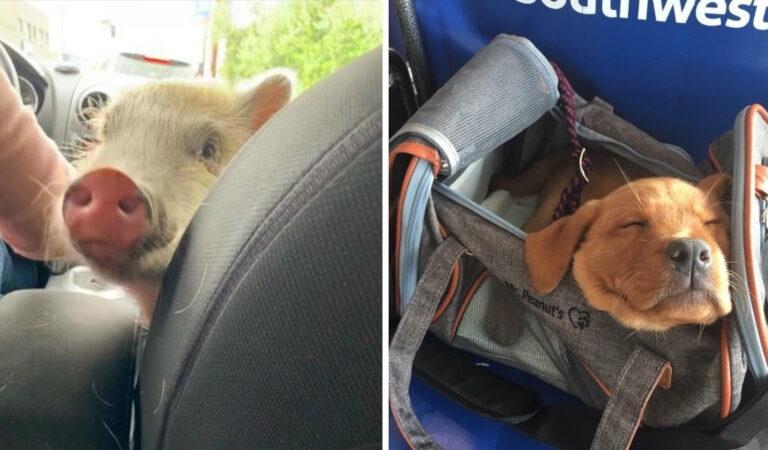 16 animali domestici che sono stati compagni di viaggio piacevoli per viaggi indimenticabili
