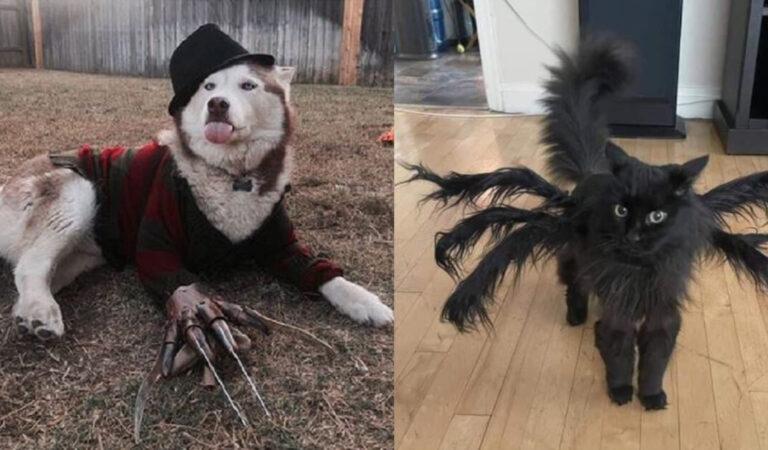 16 proprietari che hanno travestito i loro animali domestici con costumi per Halloween