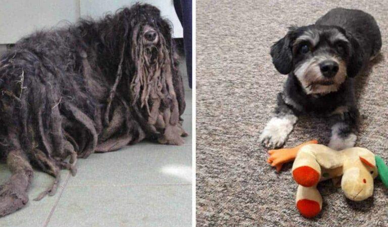La fantastica trasformazione di questo cane salvato da un'associazione che riusciva a malapena a camminare